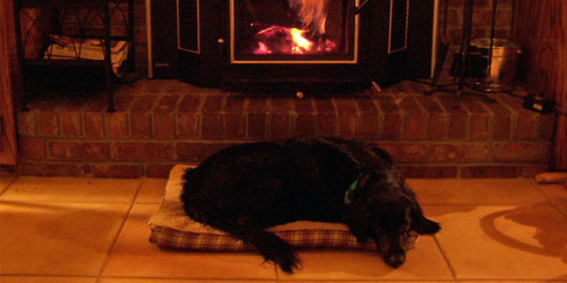 heating for dogs